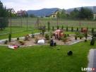 Usługi ogrodnicze-wycinka drzew i,formowanie krzewów,trawnik - 5