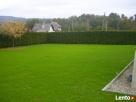 Usługi ogrodnicze-wycinka drzew i,formowanie krzewów,trawnik - 8