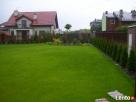 Usługi ogrodnicze-wycinka drzew i,formowanie krzewów,trawnik - 4