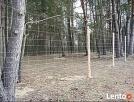 Siatka leśna/budowlana - 200/17/30 L 50mb ocynk - 8