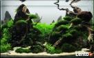 Akwarium Jakie Sobie Wymarzysz - 2