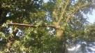Drzewa wycinamy i przycinamy - 1