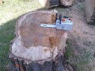 Cięcie drzew i drewna piłą spalinową - 1