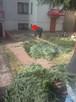Wycinki drzew podcinanie gałęzi zrębkowanie lubelskie - 6