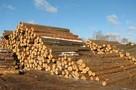 Ukraina. Surowiec drzew lisciastych i iglastych 15 zl/m3