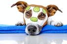 Usługi dla zwierząt i ich opiekunów