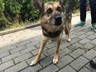 Strach ma wielkie oczy, psie oczy - adopcja Molli - 3