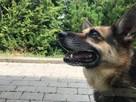 Strach ma wielkie oczy, psie oczy - adopcja Molli - 6
