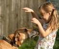 Pluto przepiękny, lubiący dzieci pies szuka domu - 6