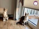 Dom tymczasowy dla kotów - poszukiwany - 6