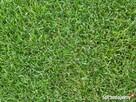 Przyjmę trawę z koszenia