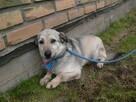 EDZIO - nieduży psiak, który pokocha Cię wielką miłością