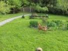 Agrohotelik dla zwierząt w warunkach domowych - 3