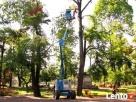Wycinka,ścinka,pielęgnacja drzew,podnośnik Szklarska Poręba