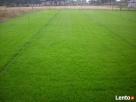 trawa w rolkach - 6