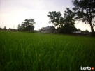 trawa w rolkach - 1
