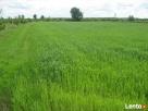 Kupię Działkę Rolną - Łąkę Nieużytek na terenie
