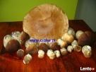 Pokoje z TV łazienką konie jeziora lasy mini zoo grzyby ryby Zbiczno