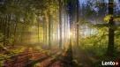 Sprzedam las (Mazowieckie, Gmina Raciąż) Raciąż
