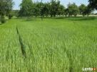 sprzedaż działki rolno-budowlanej Pniewy