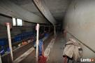Dom z halą pod pieczarkarnie Kębłowo - 3