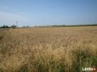 PILNE ! Sprzedam grunty orne 3,69 ha Ciółkowo Radzanowo
