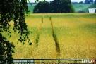 Agroturystyka - 1