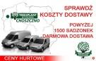 Sadzonki Świerk Srebrny PICEA PUNGENS KAIBAB 25-40 cm HURT!! - 8