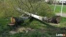 Wycinka drzew-ścinka drzew Rybnik