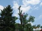 Wycinka drzew Włodawa