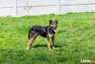 Manuel, młody psiak bardzo fajny średniej wielkości Warszawa