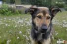 Trop - samotne psie serce do pokochania Luzino