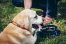 Akcesoria dla psów- JoQu- Producent - 5