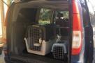 Transport zwierząt domowych - 3