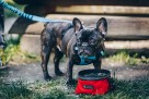 Akcesoria dla psów- JoQu- Producent - 4