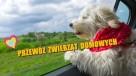 Transport zwierząt domowych - 1