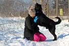 Bleki pies z charakterem w typie labka szuka odpowiedzialneg - 3