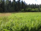 Działka rolna koło Rabki Zdrój - 5