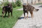 Lolek - wesoły psiak szuka domu - 3