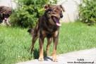 Lolek - wesoły psiak szuka domu - 2
