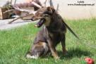 Lolek - wesoły psiak szuka domu - 8