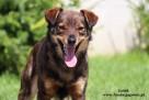 Lolek - wesoły psiak szuka domu