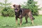 Lolek - wesoły psiak szuka domu - 5