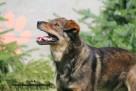 Lolek - wesoły psiak szuka domu - 6