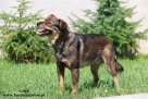 Lolek - wesoły psiak szuka domu - 4