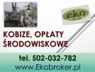Wprowadzenie raportu, Kobize, cena tel, 502-032-782, Gdańsk - 3