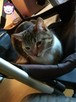 Chałka - delikatna kocia królewna - 15