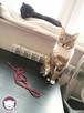 Chałka - delikatna kocia królewna - 16