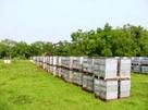 Ukraina. Miod 6 zl/kg. Pozyskujemy ziolomiody, propolis,wosk
