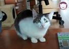 Vastra - nieśmiała koteczka szuka domu i przyjaciela! - 6